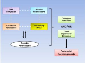 Vaiopoulos, A.G., Athanasoula, K.C., Papavassiliou, A.G., 2014. Epigenetic modifications in colorectal cancer: Molecular insights and therapeutic challenges. Biochimica et Biophysica Acta (BBA) - Molecular Basis of Disease 1842, 971–980. doi:10.1016/j.bbadis.2014.02.006